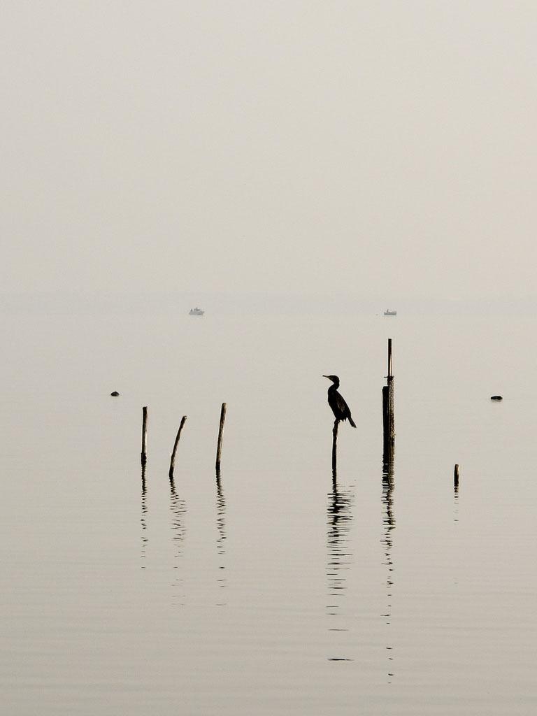 Cormorano sul Lago di Garda